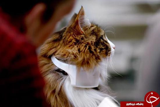 میو میوهای گربه خود را ترجمه کنید + تصاویر