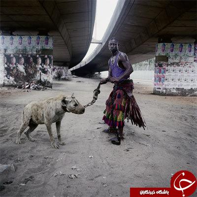 خیابان گردی با کفتار وحشی در آفریقا+تصاویر