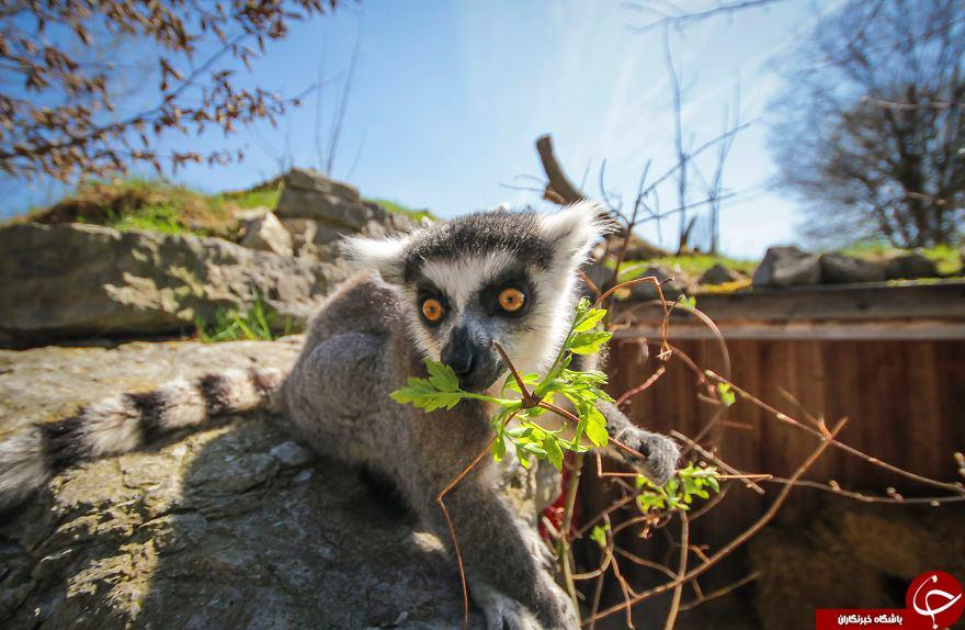 ژست جالب حیوانات درلنز دوربین نشنال جنوگرافی