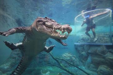 عجیب ترین شهربازی های جهان/ از پارک کوتوله ها تا شنا در کنار تمساح ها+ تصاویر