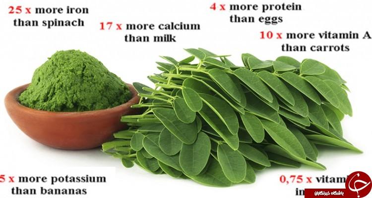 گیاه عجیبی که قاتل 4 نوع سرطان است!