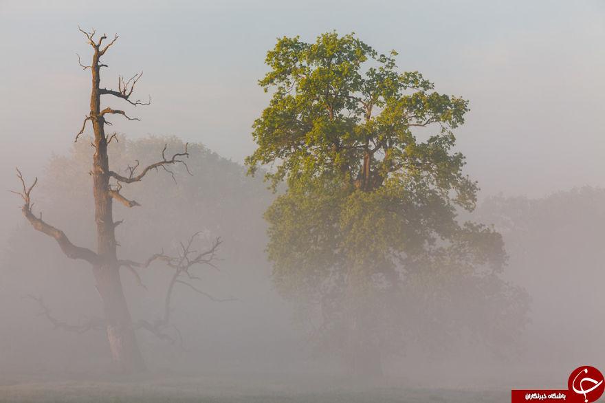 سرزمین رویایی بلوط در لهستان + 17 عکس