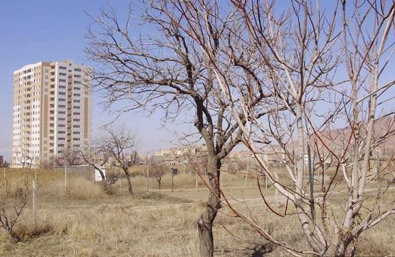 حکایت ثروتمندان پایتخت که ریشه میخشکانند تا برج بسازند