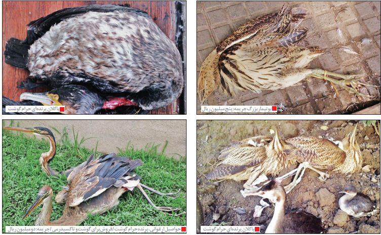 غربت و مرگ در زیستگاه های موقت پرندگان مهاجر/تحریم گردشگری ایران بخاطر پرندهکشی