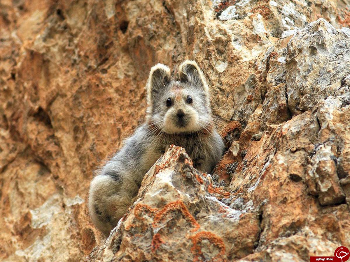 کمیاب ترین حیوانات جهان +تصاویر