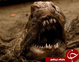 نمایی نزدیک از ترسناکترین و عجیبترین جانوران جهان+تصاویر