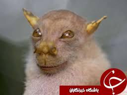 ترسناکترین حیوانات دنیا که تا کنون ندیده اید+تصاویر