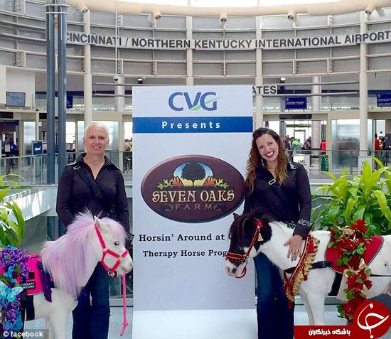 فرودگاههای آمریکا میزبان اسبهای مینیاتوری + تصاویر