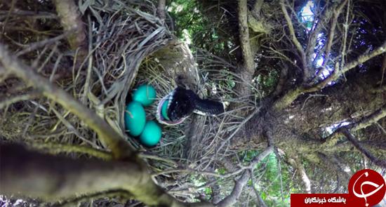 پایان غیرقابل انتظار فیلم تخم پرندگان/ پایان تلخ یک داستان شیرین + تصاویر