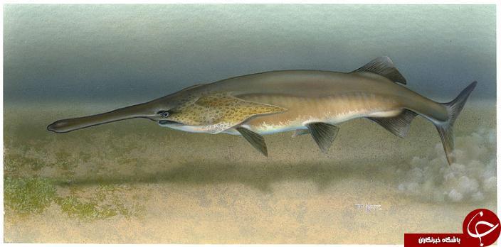 غول پیکرترین ماهی های جهان +تصاویر