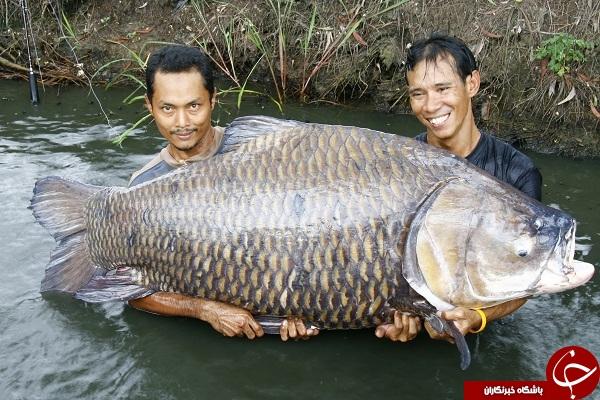 کشف بزرگترین ماهی جهان + تصاویر