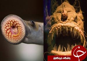 با برخی حیوانهای چندشآور و عجیب آشنا شوید