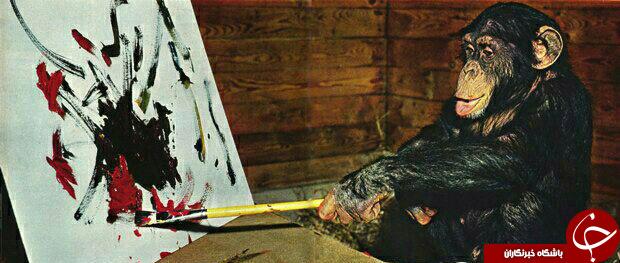 شامپانزه آوانگارد در حال خلق اثر/