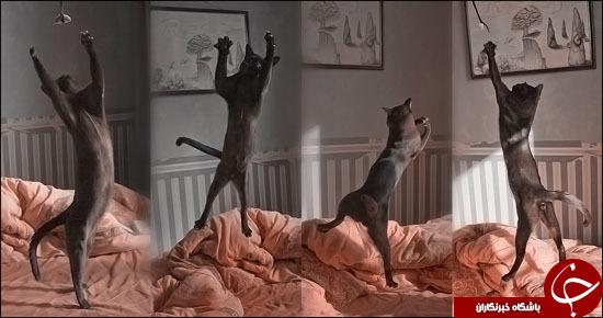 وقتی گربهها باله میرقصند+تصاویر