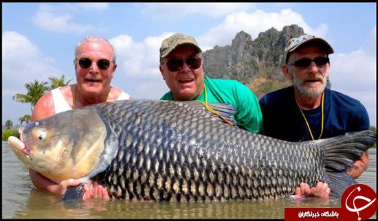 طعمه ماهی 82 کیلویی با خاکستر دوست مرده + تصاویر
