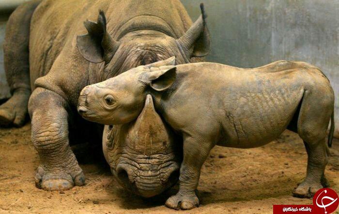 زیباترین وشگفت انگیزترین حیوانات ازنگاه نشنال جئوگرافی