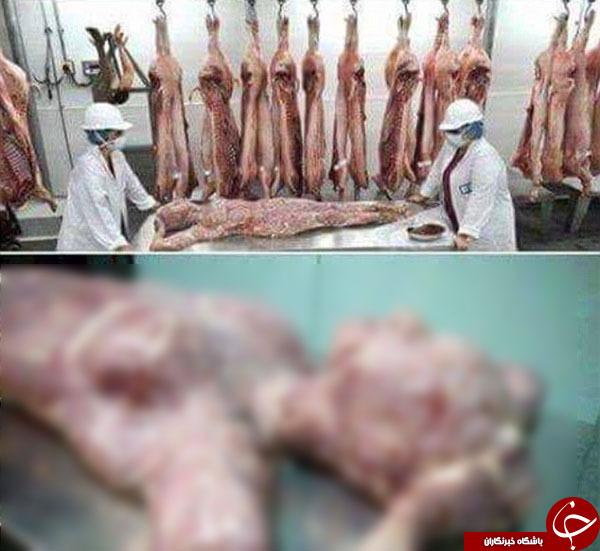 فروش گوشت مردگان در فروشگاههای آفریقا + تصاویر
