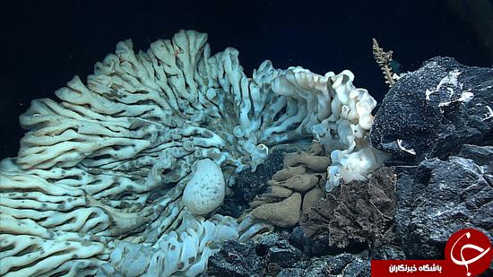 مینی ون زنده در اعماق دریا + تصاویر
