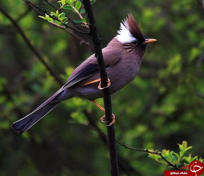زیباترین پرندگان کمیاب در جهان+ تصاویر
