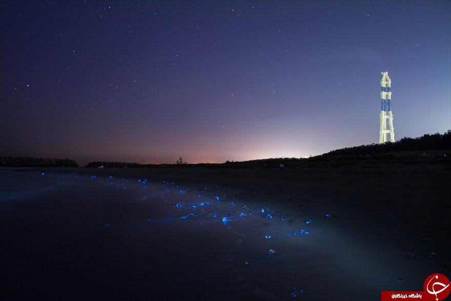 درخشش عجیب ترین دریای ژاپن+تصاویر