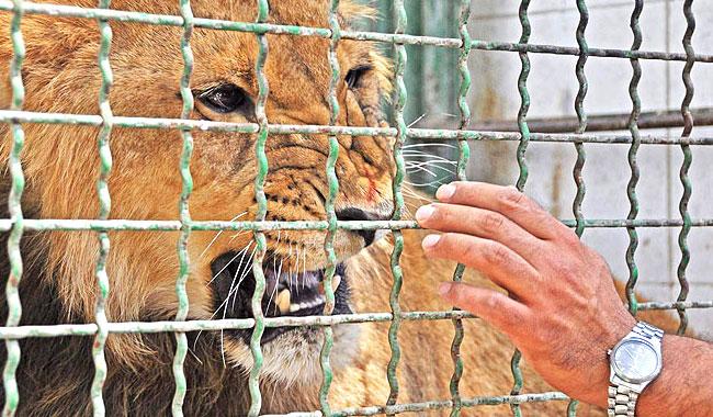 بند حیواناتِ بی پناه؛ تنگ،غیر استاندارد،نا ایمن/ نظارت بر باغ وحشها چگونه است؟