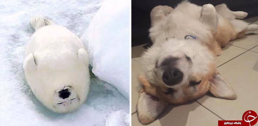 شباهت خارق العاده حیوانات دریایی با سگ ها+تصاویر