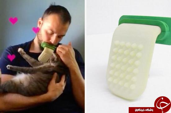 دیگر راحت گربه خود را لیس بزنید + تصاویر