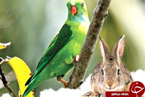 حیواناتی که پشت سرشان هم  چشم دارند+تصاویر