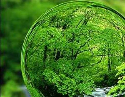چوب حراجی که به جان محیط زیست افتاده/آغاز شمارش معکوس زمین عاری از تنوع زیستی