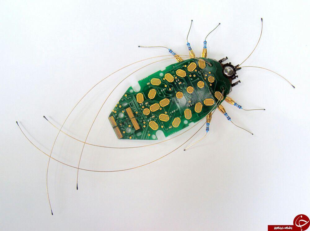 حشراتی که فیلمبرداری می کنند+10 عکس