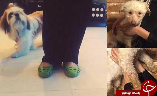 شکنجه وحشتناک سگ های خانگی توسط دختر تهرانی / تهدید افراد به سوزانده شدن در اسید +عکس