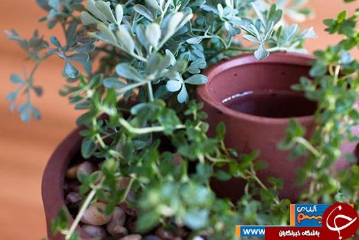 عکس/ روشهای فوق العادهی آبرسانی برای گیاهان آپارتمانی