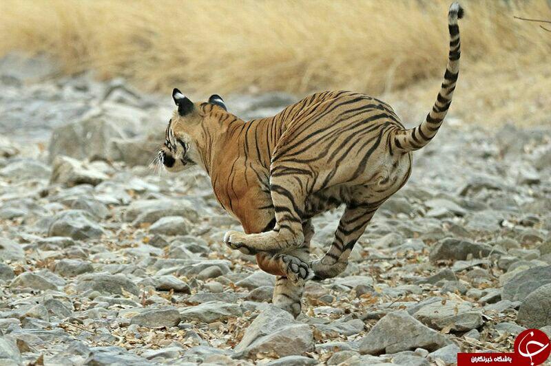 دنیای بی رحم حیات وحش به روایت تصویر