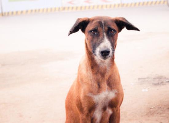 سگ فداکار + عکس