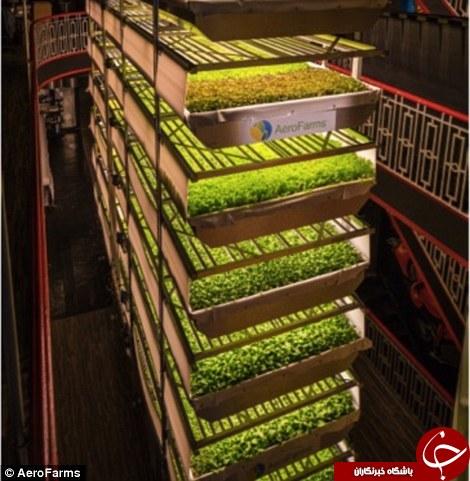 ساخت بزرگترین مزرعه عمودی جهان در نیویورک+ تصاویر