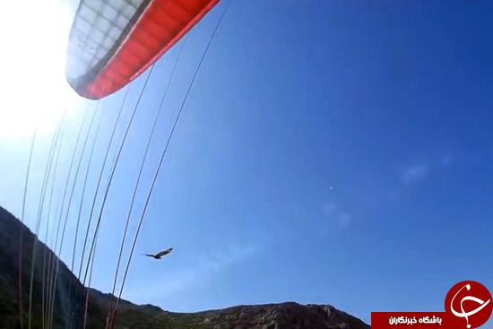 لحظه وحشتناک حمله به عقاب به پاراگلایدر + عکس