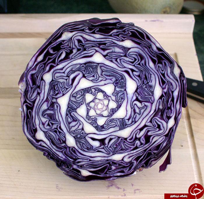 گیاهانی که به طورشگفت انگیزی شبیه اشکال هندسی اند+25 عکس