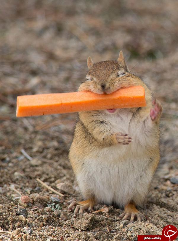 تابه حال غذاخوردن حیوانات را ازنزدیک دیده اید؟+تصاویر