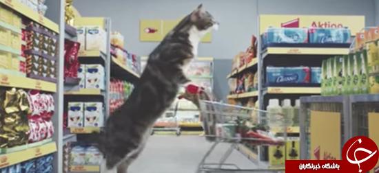 پر فروش کردن سوپر مارکتها با گربهها + عکس
