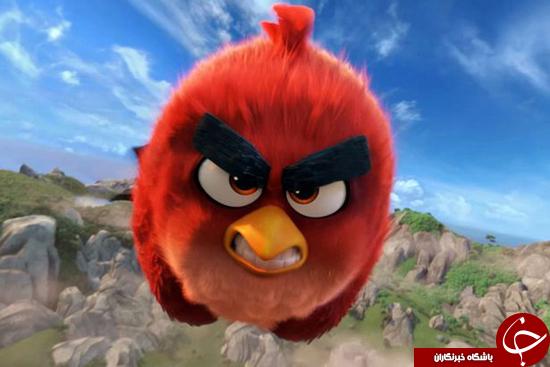 پرنده قرمز خشمگین در جهان واقعی + عکس