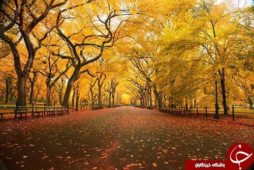 طنازی وخودنمایی رنگها درآغوش طبیعت+تصاویر