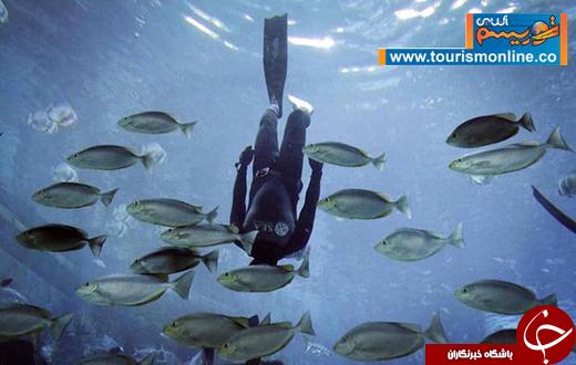 عکس/ غواصی در آکواریوم