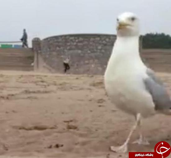 ماجرای آیفون دزدی مرغ دریایی + عکس
