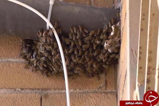 حمله زنبورها به خانه + عکس