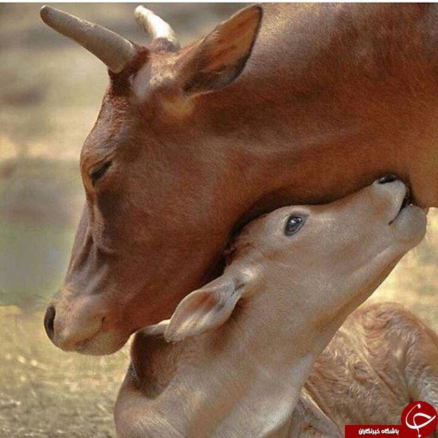 وقتی حیوانات احساساتی می شوند