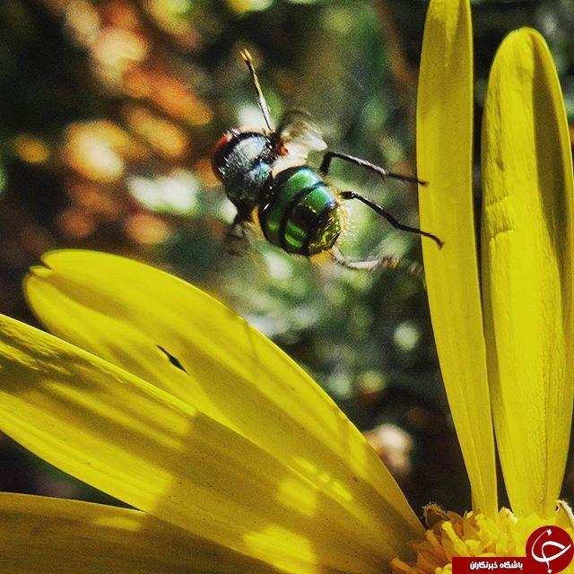 حشرات از نگاه دوربین نشنال جئوگرافی