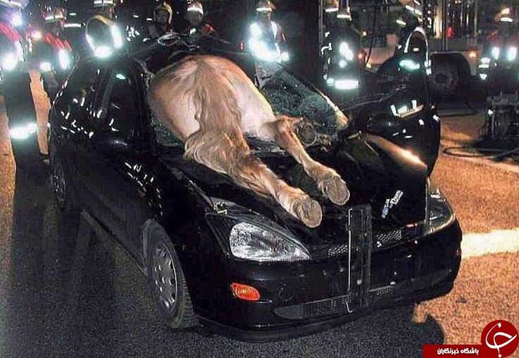 ریزترین حشره دنیا/تصادف عجیب اسب بایک خودرو/لاستیک خودرو 2 میلیارد تومانی /ساخت اجاق گاز بارینگ ماشین/