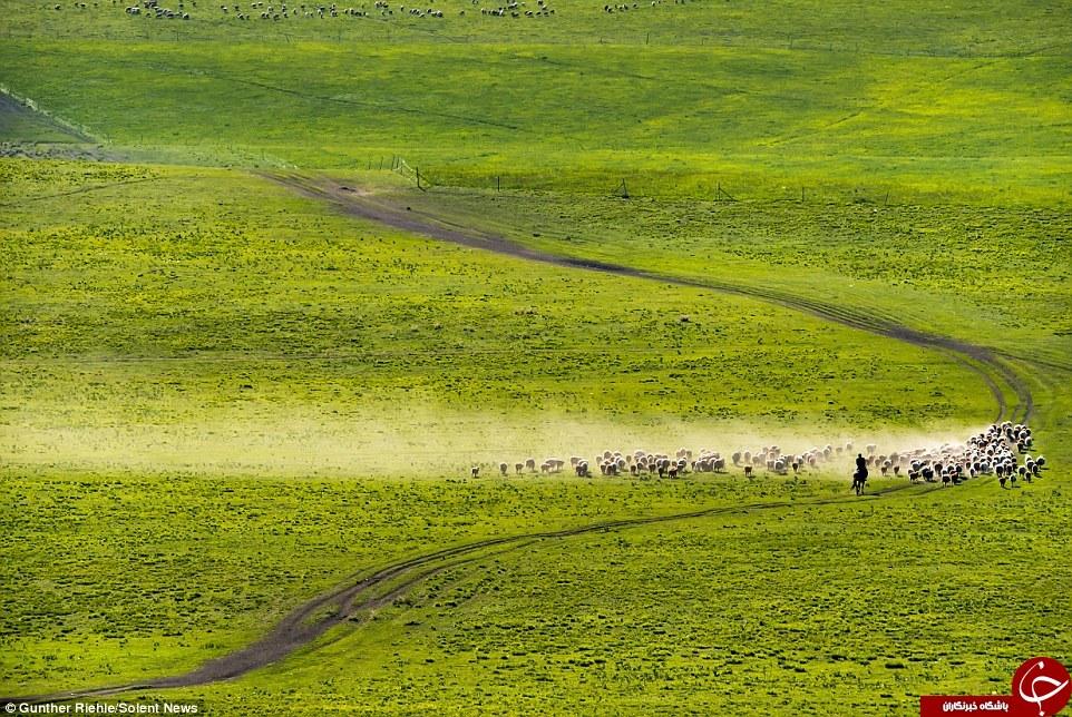 تصاویری فوق العاده از چوپانی در جاده ابریشم