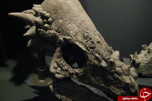 دایناسورهای عجیب + تصاویر