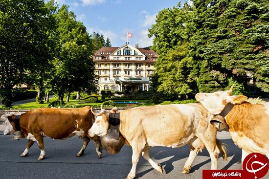 عکسهای دیدنی از یک هتل در سوییس